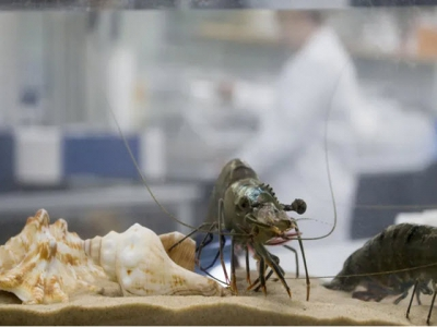 A new tool in the battle against decapod iridescent virus (DIV-1)