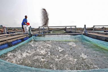Khủng hoảng thị trường thức ăn thủy sản châu Á