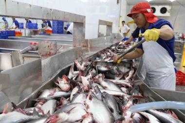 Xuất khẩu cá tra lao dốc: Đừng đổ hết tội lỗi cho COVID-19!