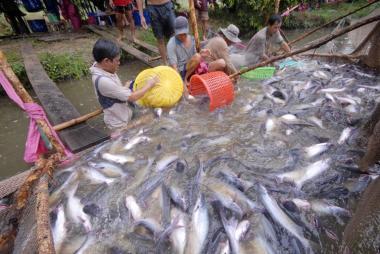 Xuất khẩu cá tra sang Mỹ nhích nhẹ