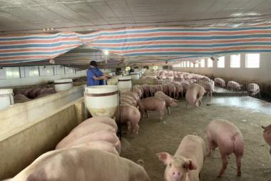 Khuyến nông dồn lực triển khai mô hình chăn nuôi an toàn sinh học