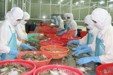 Sau 1 tháng EVFTA có hiệu lực: Để tôm Việt vượt khó đến EU