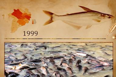 Những bài học trong phát triển nuôi trồng thủy sản Việt Nam dưới cái nhìn của một người trong cuộc