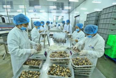 Doanh nghiệp xuất khẩu thủy sản chạy nước rút trong 100 ngày vàng