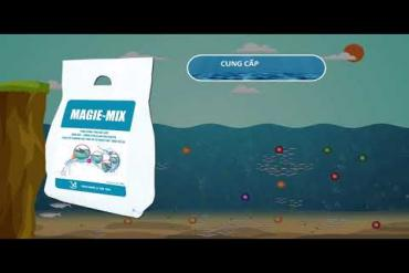 MAGIE MIX _ INCREASE EXCHANGE, REDUCE, ANTI-STRESS WHEN TRANSPORTING